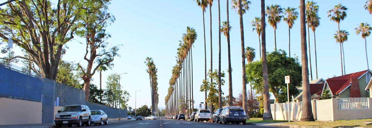 Palm trees near Crenshaw High School